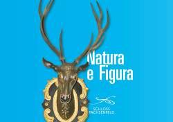 Natura e Figura